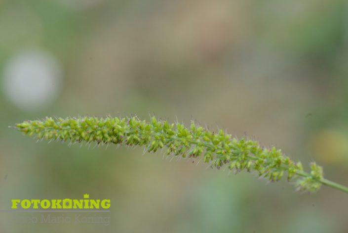 gras groen onkruid