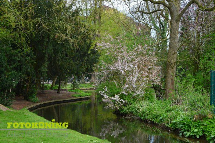 bloeide voorjaarsplekken in utrecht