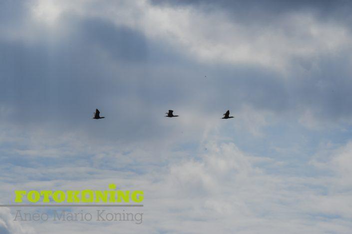 Vossen,Ijsvogel,Herten Waterleidingsduinen Amsterdam