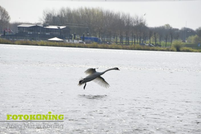 Voorjaarswandeling Almere