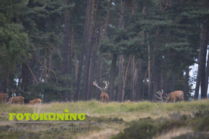 Avondwandeling Nationaal Park De Hoge Veluwe 11 Juli